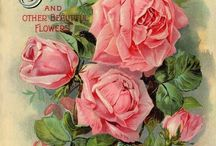 DECOUPAGE - ROSES