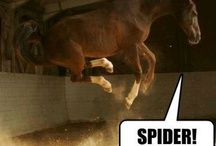 Horsey Inspiration