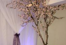 Topiary Tree Hire / Whether for a wedding, a party or any other event. Whatever the occasion, our beautiful topiary plants and trees will help to make it unforgettable.
