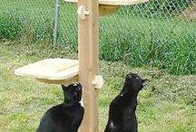 Cat enclosure ideas
