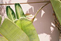 Növénykék