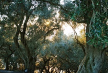 Nomore pain ..... / A spring day, olive trees and daisy...