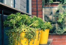 Succulents of Pinterest / Enjoy!