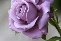 blomster / Inspiration