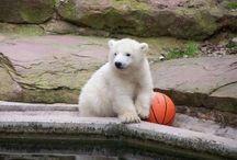 medvidek-snehulaček