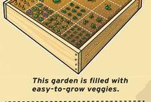 warzywniak