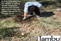 OUR environment is important to us / We care about the environment and embracing every path there is in front of us. Jambu partners with American Forests to plant 50,000 trees!