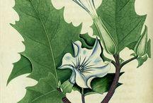 Botanical Prints / botanicals+prints=awesome