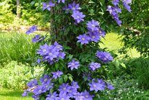 Baum und Blumen Harmonie