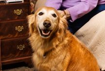 Pet Health Information / Reliable pet health information that's written and reviewed by veterinary professionals.