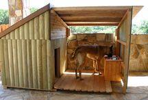 casa mascotas