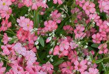 Late summer flower trees