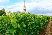 7 Destinatii ideale de vacanta pentru iubitorii de VIN / Dacă şi tu eşti un iubitor al vinurilor şi ştii să apreciezi savoarea acestei băuturi, atunci trebuie, cel puţin o dată în viaţă, să petreci câteva zile în livezile cu viţă de vie şi cramele care produc sortimentul tău preferat de vin.