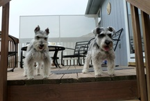 Best local dogs / Cute dogs around town