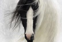 Pets / by Janet Demien