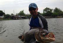 Latest Thailand fishing reports. / Latest fishing news from Fishsiam Ltd Thailand