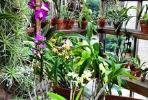 Garden - Orchids / by N K