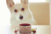 dog/ cat + tea/coffee