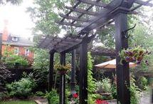 Steve's garden