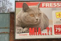 Cat photos / My photos about cats.