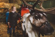 Christmas at Gwel an Mor / Christmas and New Year are magical times of the year at Gwel an Mor. With our very own reindeer Nadelik and Lowen (Merry and Christmas in Cornish) in residence at Feadon Farm Wildlife Centre, there's a very special atmosphere during the festive season. From our Celebration of Christmas Fair at the end of November, we countdown to the big day with Meet Santa Afternoons, Christmas Party Nights, Christmas Lunches and Afternoon Teas.