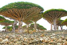 Travel | Socotra / One of the most amazingly beautiful and mysterious places on earth.  Often referred to as the Garden of Eden, the most alien looking place on earth.  Amazing travel destination, completely unique to anywhere else on earth.  In the middle of the Arabian and Indian oceans