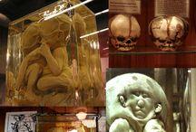 dream home / mutter museum