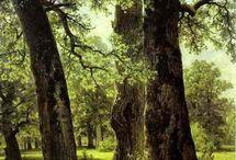 Orman / Ağaçlar