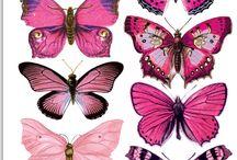 Butterflies - Admiration