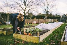 Kitchen Garden Stories