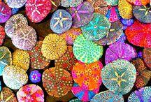 urchins & sea shells