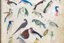 Europeana - Natural History