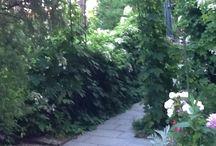 Puutarhassa / Toivolan puutarha