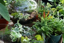 terrarium envy / by Tammy Goldsmith Perkins