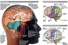 Brain Sciences / Neurosciences etc