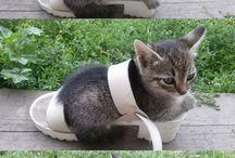 kissa sandaalissa 3 kuvaa