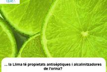 Llima / Lima  / Aquí trobaràs curiositats sobre la llima / Aquí encontrarás curiosidades sobre la lima