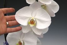 orhideáim