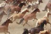 Podrozeciwroze Horse