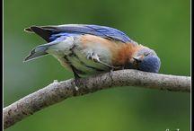 BIRD lovin' girl