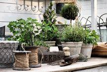 dreamy greenhouse