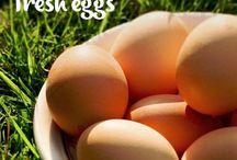Kippen Eieren bewaren
