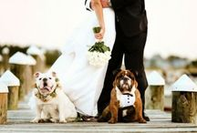 Wedding with pets