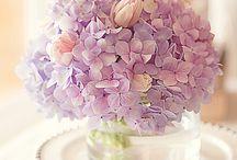 HUIS HUIS︱Blooms / by Kim van Wyk
