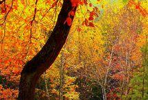 podzim - autumn