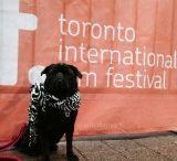 Toronto International Film Festival 2015