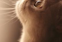 Kätzchen,Katzen u. KATZEN