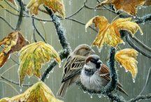 Ptaki zdjęcia i malarstwo