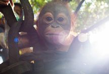 Borneo / A collection of images of beautiful Boreno, including some from our very own projects!