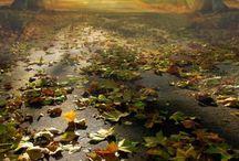 Autumn Joys